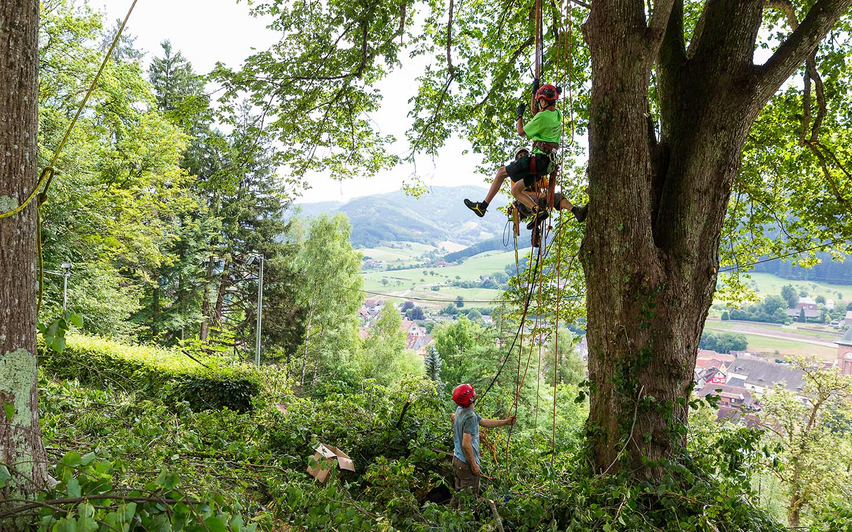 Baumsanierung & Gehölzschnitt